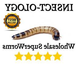 250 500 Live Superworms Super worms  Reptile Birds Feeder In