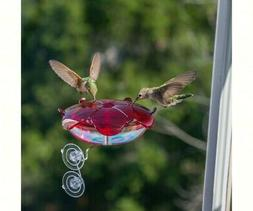 344550 ruby sipper window hummingbird