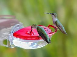 Aspects ASPECTS437 The Gem Window Hummingbird Feeder