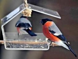 Clear hanging bird feeder - Patio & garden decor - Birdwatch