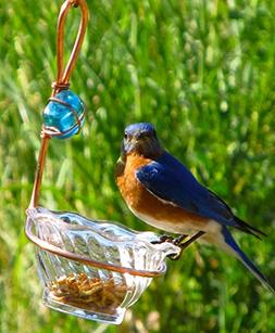 Birds Choice Copper Single Cup Bluebird Feeder