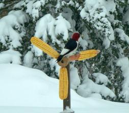 Ear Corn Cardinal / Squirrel Spinning Walnut wooden Feeder O