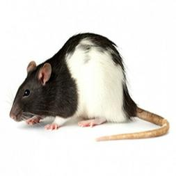 Frozen Feeder Rats for Reptiles --- Different sizes! FREE SH