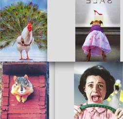 FUNNY FRIENDSHIP CARD Avanti Press SQUIRREL / CHICKEN / DOG