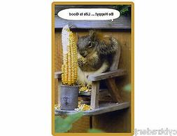 Funny Squirrel On Feeder Chair  Refrigerator / Tool Box Magn