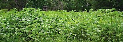 1 lb IMPERIAL PLANT seed Food Plot & Turkey