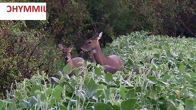 1 IMPERIAL POWER seed Food Plot Turkey