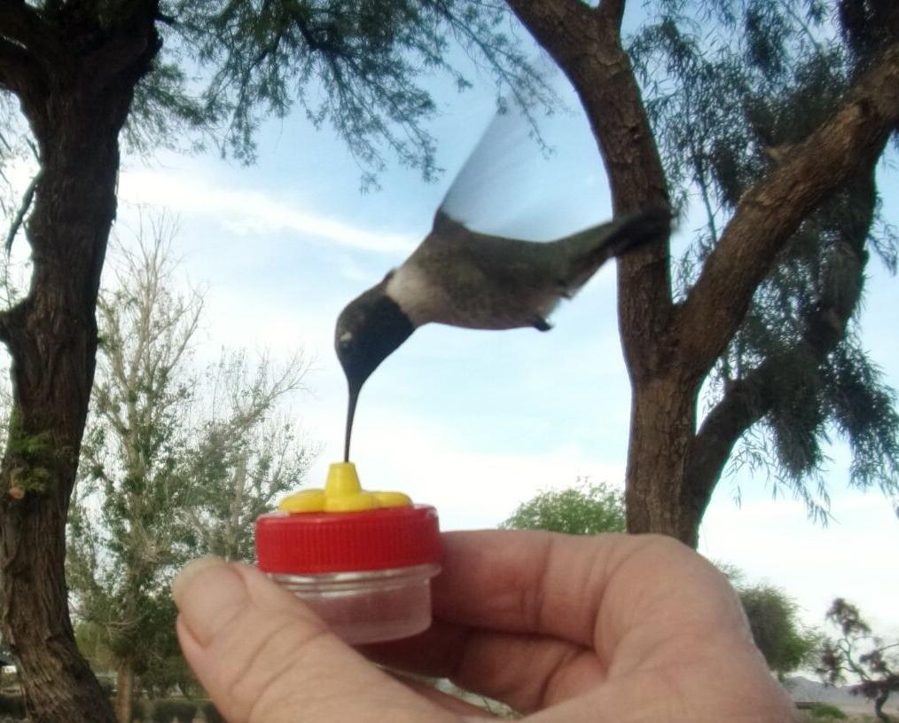 5 HAND HUMMINGBIRD FEEDERS the hummingbird feeder
