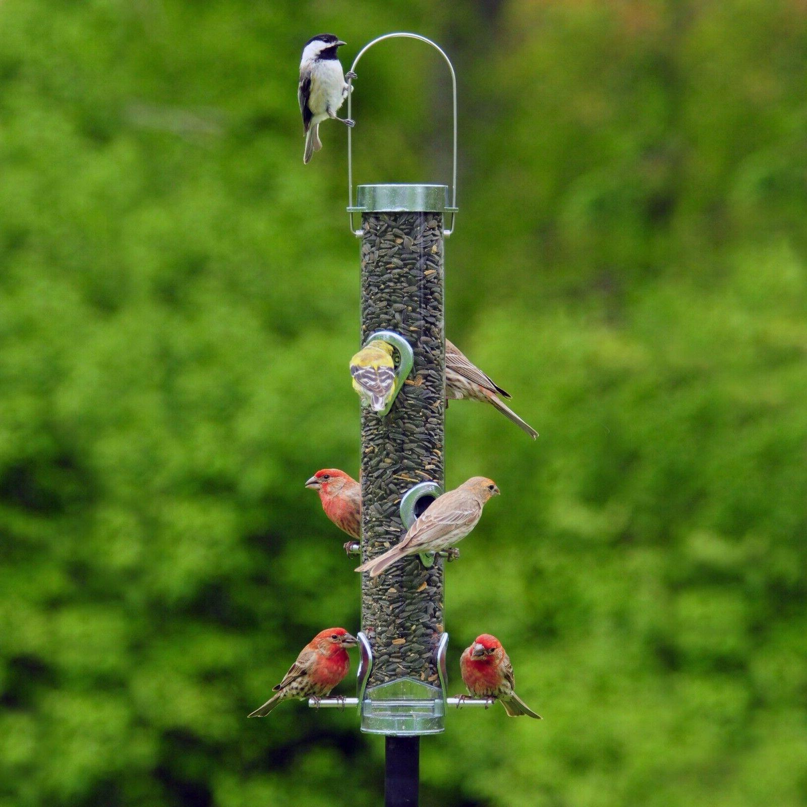 a 6f bird feeder