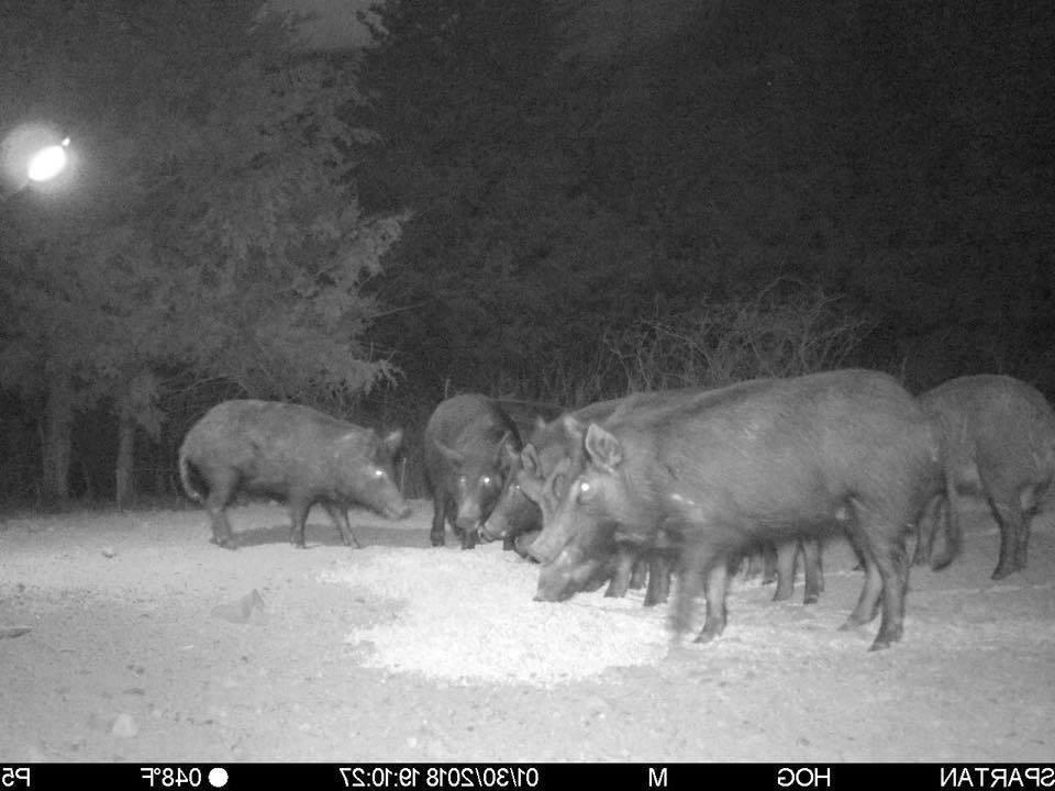 All Seasons Boar Hunting Light Green
