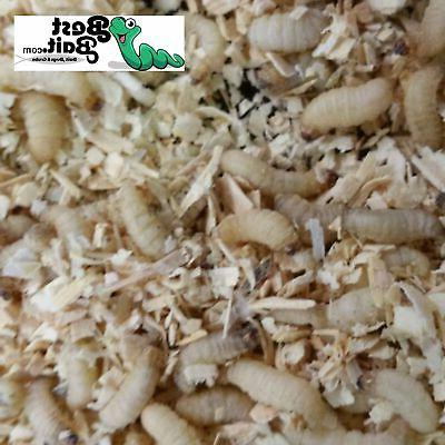Bestbait Waxworms, Wax worms Fishing, Reptile Shipping