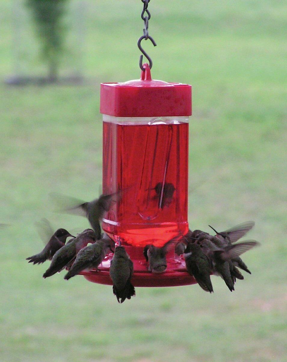 First 3055 32-ounce Hummingbird Feeder Shipping