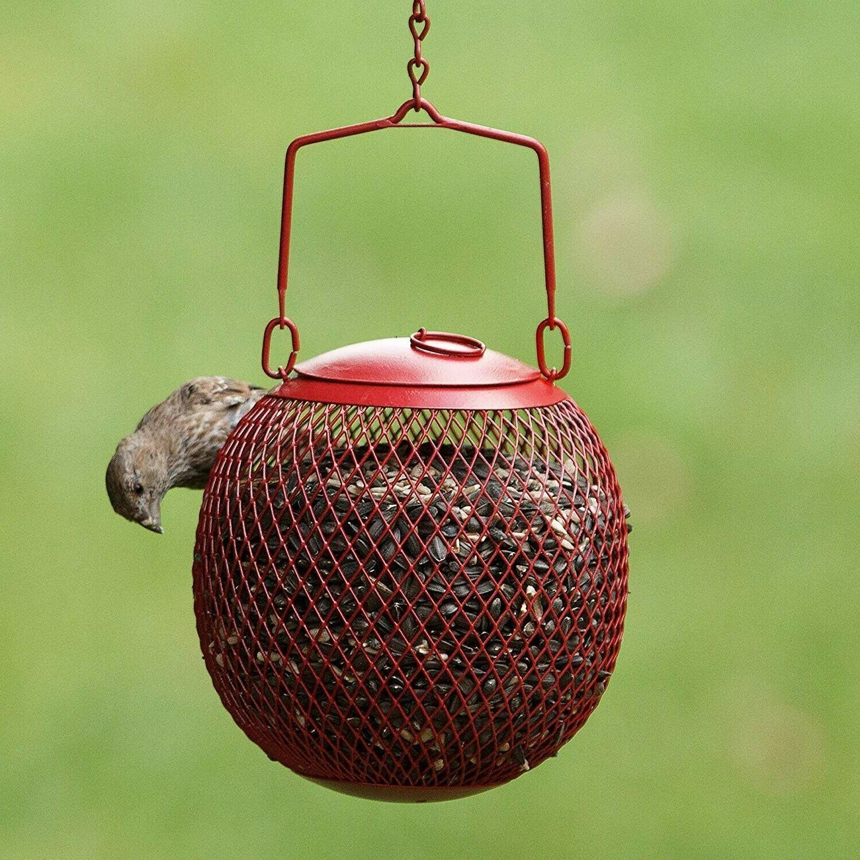 Bird Proof Wild Hanging Garden Patio
