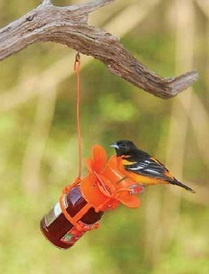 Birdfeeder Oriole Jar Bird