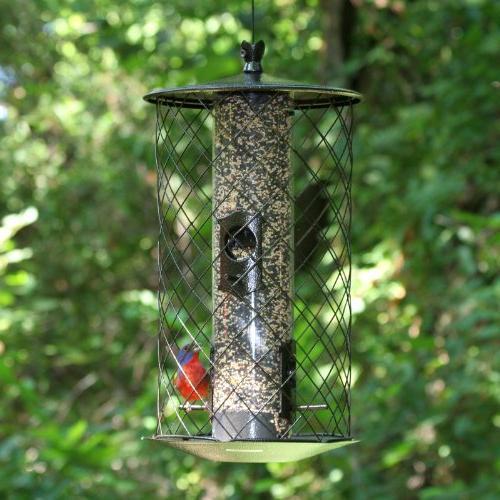 Perky-Pet The Bird -