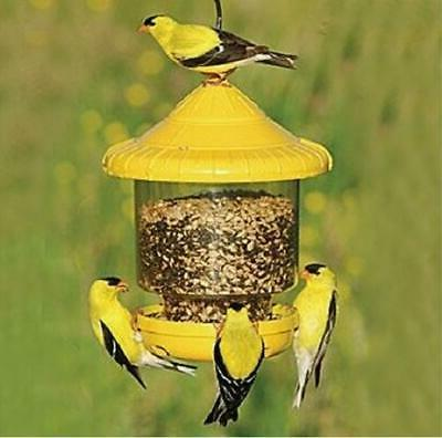clingers only bird feeder yellow free usa