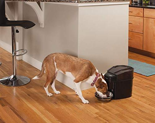 PetSafe Feed Dispenses Dog Food or Cat