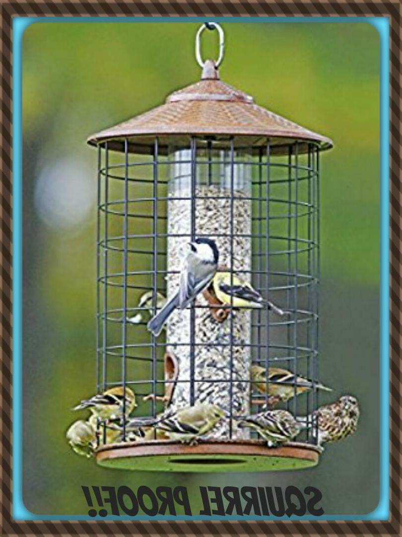 new hiatt squirrel proof grande birdfeeder birds