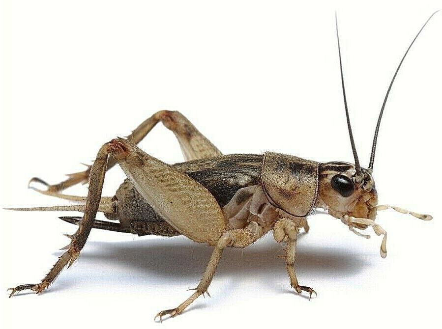 Pet Lizard Live Cricket Feeders Alive Food