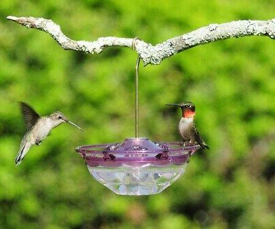 plum hummblossom 4 oz hummingbird feeder 3