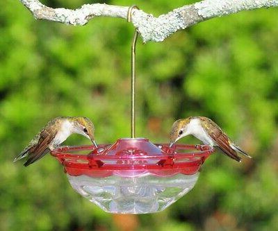 rose hummblossom 4 oz hummingbird feeder 3