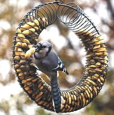 Songbird Essentials Peanut