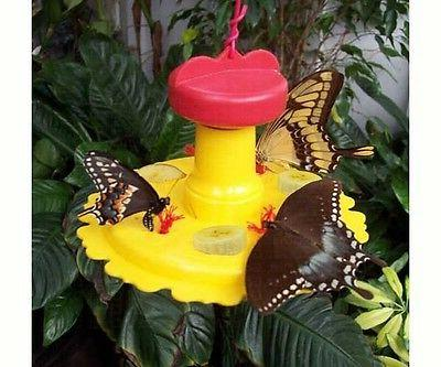 Songbird Butterfly