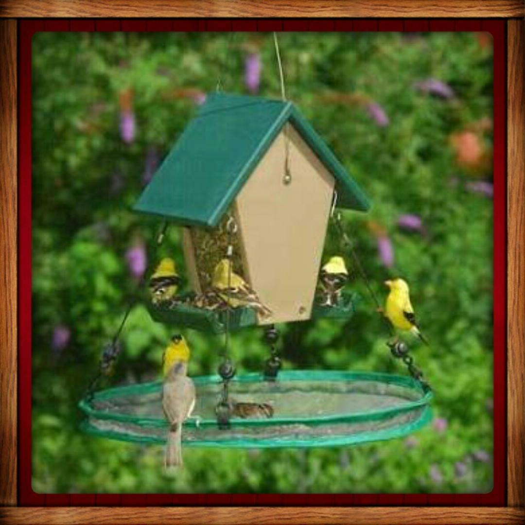 Songbird SEED SEEDHOOP SEED PLATFORM