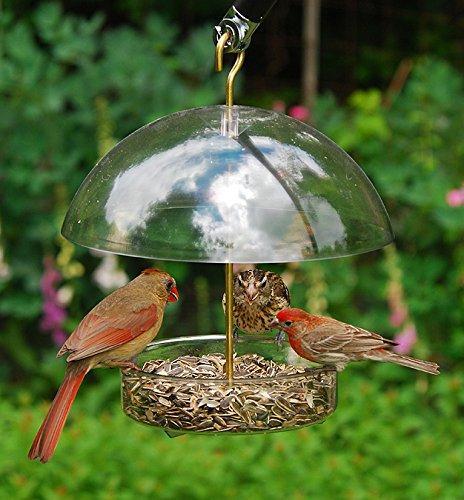 Droll All Birds