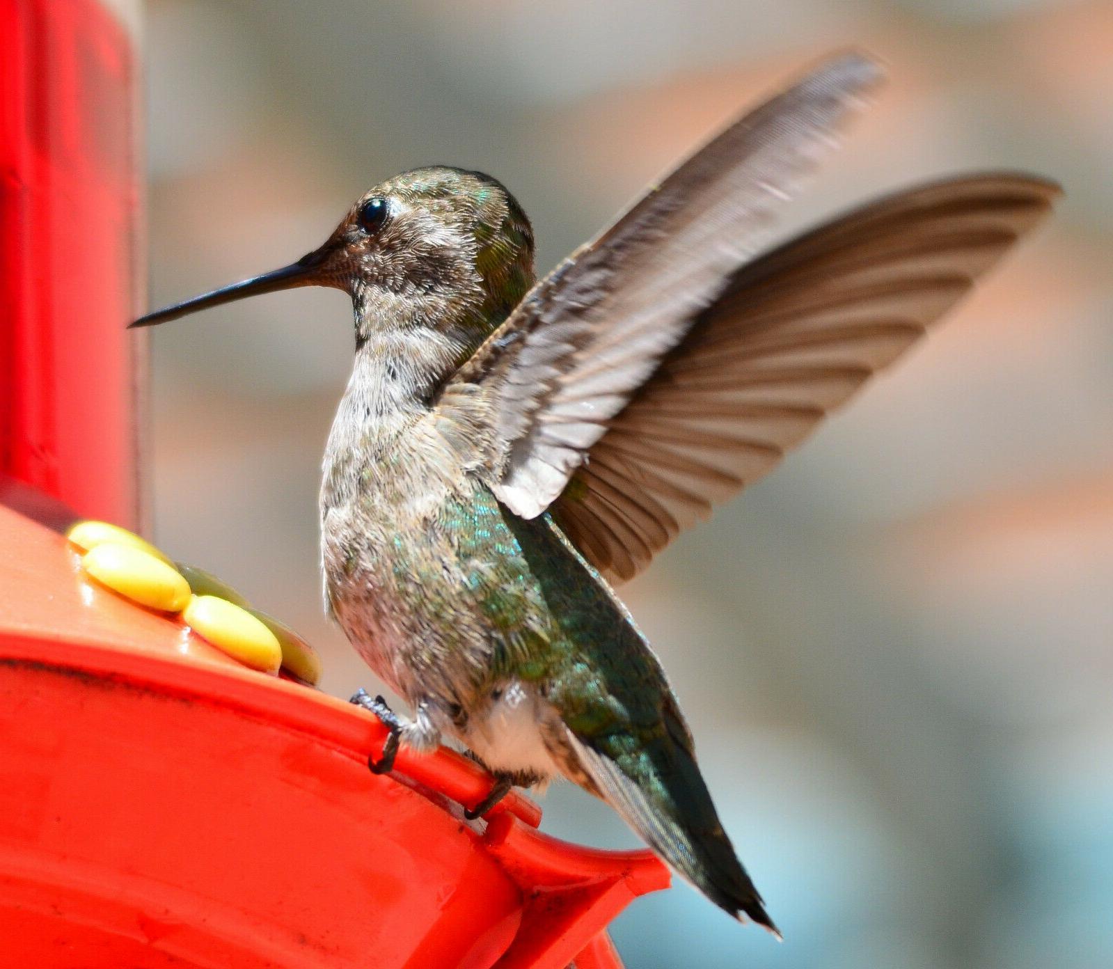 SPRINGTIME SPECIAL!! SET OF QUALITY GARDEN COLLECTION HUMMINGBIRD FEEDERS
