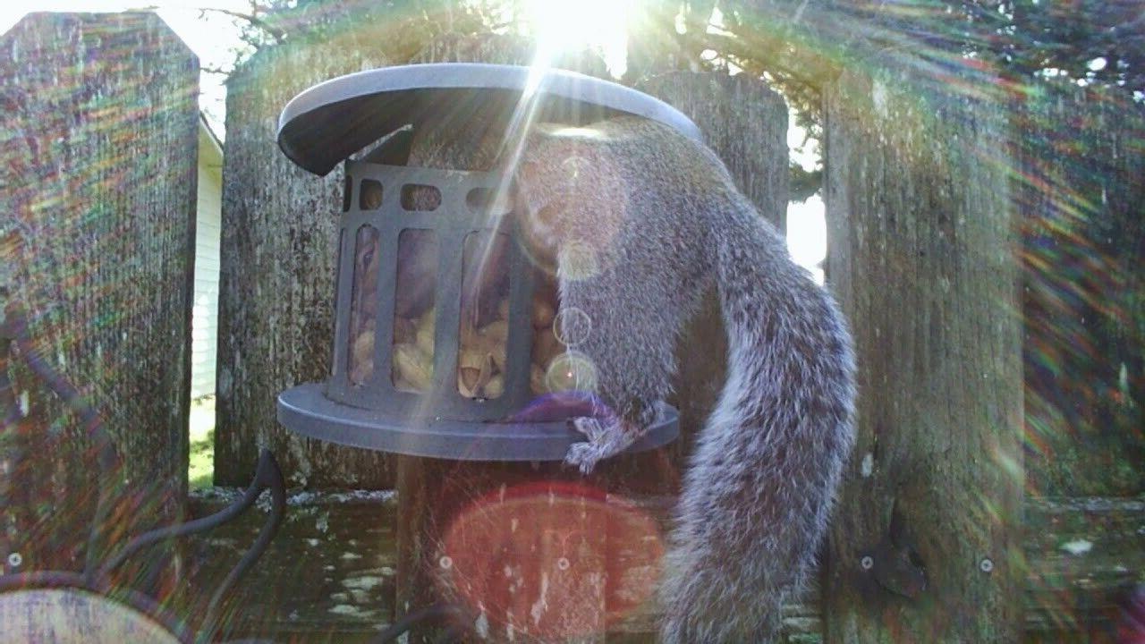 Woodlink Squirrel Diner Peanut Feeder