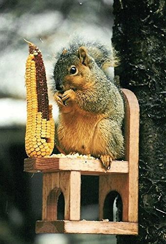 squirrel feeder cedar chair