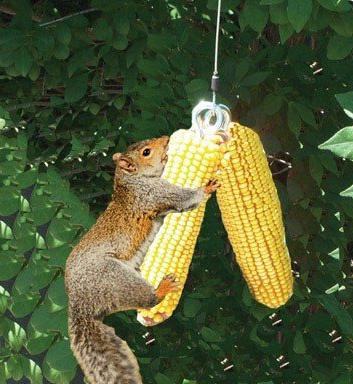 Squirrel Feeder Deluxe