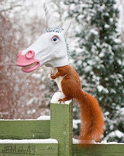 Unicorn Head Squirrel by McPhee