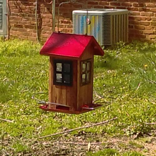 KINGSYARD Squirrel BIRD