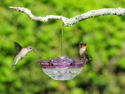 Aspects Mini HummBlossom Hummingbird Feeder, Plum, 434