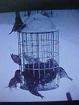ORIGINAL SQUIRREL PROOF STAINLESS STEEL WILD BIRD FEEDER - S