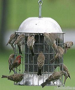ORIGINAL SUPER SIZE SQUIRREL PROOF SS STEEL WILD BIRD FEEDER