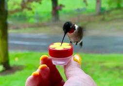 Single HUM-Button™ Mini Hand Held Hummingbird Feeder NIFTY