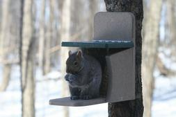 Birds Choice Squirrel Feeder Munch Box