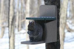 Birds Choice Squirrel Feeder Munch Box